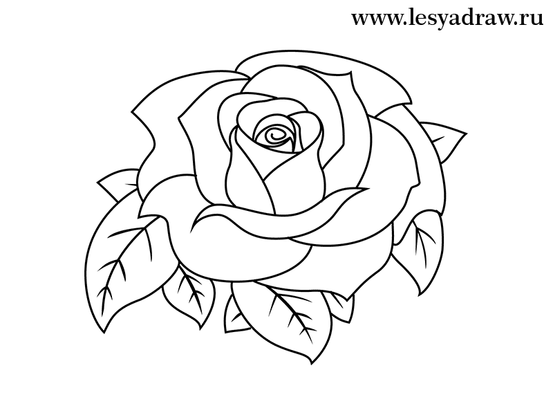 Розы рисунок карандашом поэтапно