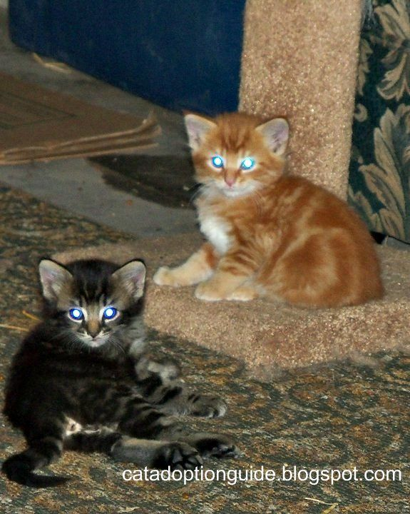Thanks Mom For Comfy Carpet Thingy Hang Out Socializing Tips For Feral Kittens By Sgolis Feral Kittens Kittens Cats