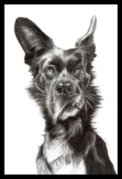Caricatures animaux 2018 animal art pinterest caricature illustration artwork - Animaux humoristiques ...
