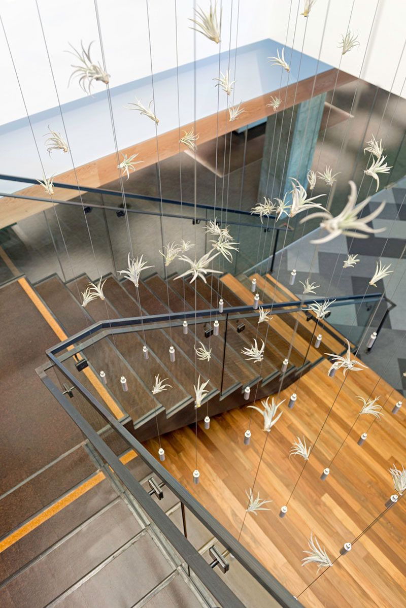 studio oa cisco meraki office. 6 Creative Ideas For Displaying Air Plants In Your Home Studio Oa Cisco Meraki Office