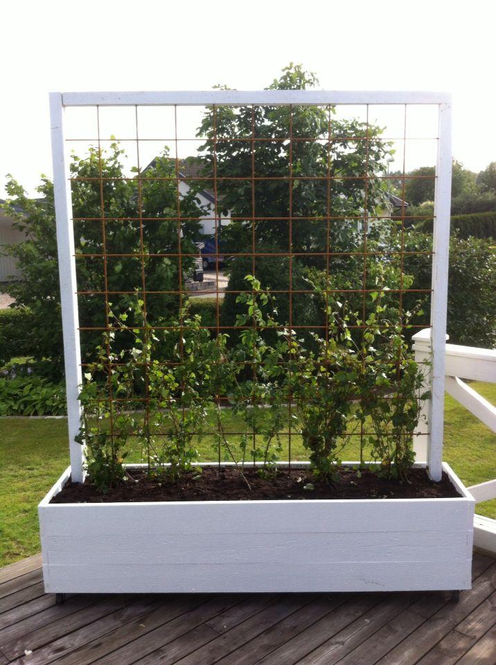 Garden Planter With Metal Trellis Piha Pinterest Outdoor