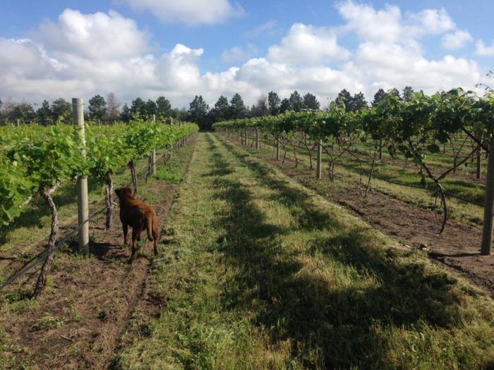 prairie creek vineyards