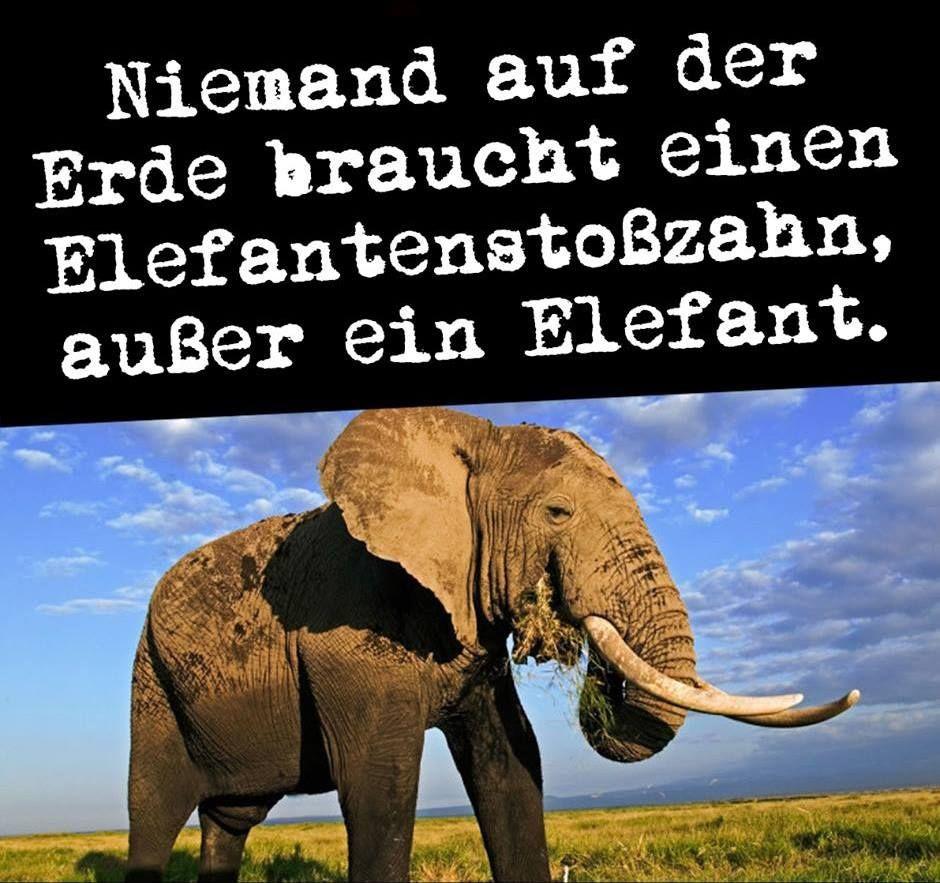 Niemand Auf Der Erde Braucht Einen Elefantenstoßzahn Außer
