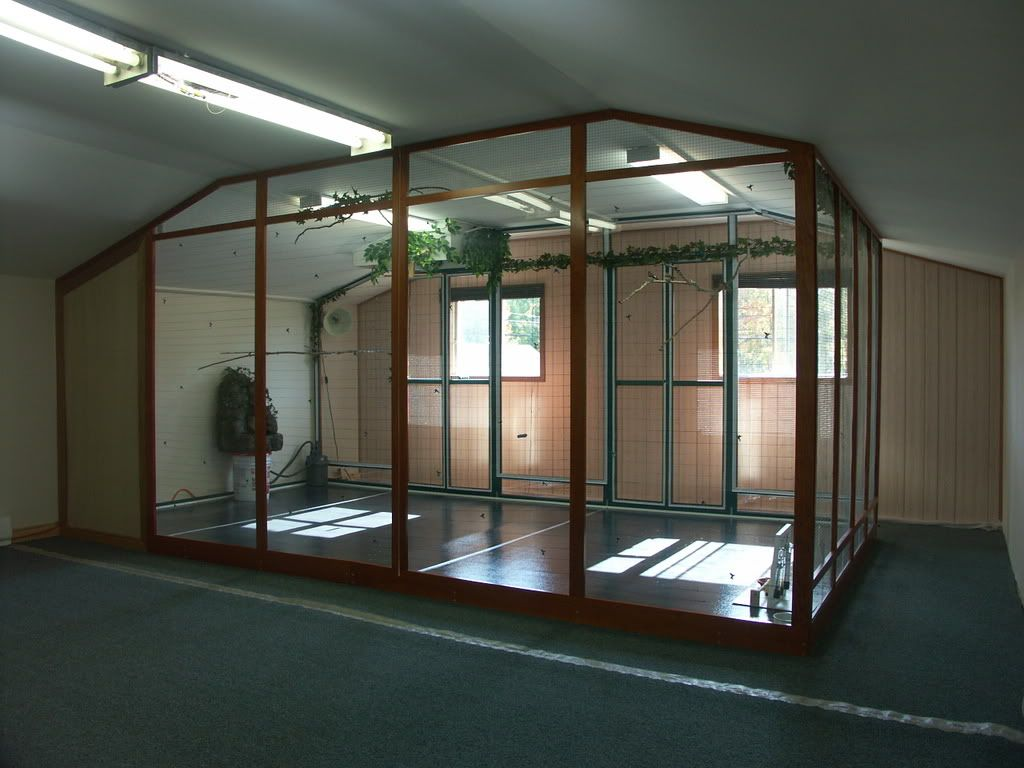 Indoor aviary i would love this for a secret garden type for Birdcage bedroom ideas