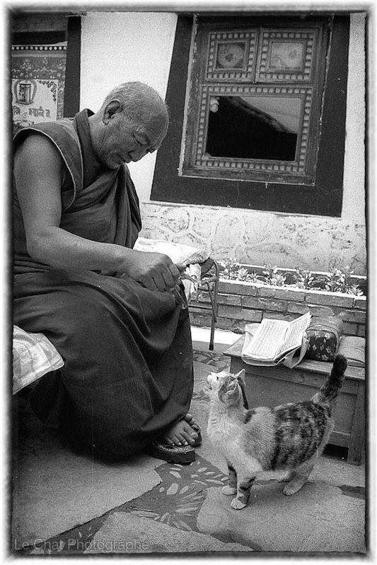 moine tibétain jouant avec son chat | Chats du Tibet | Pinterest ...