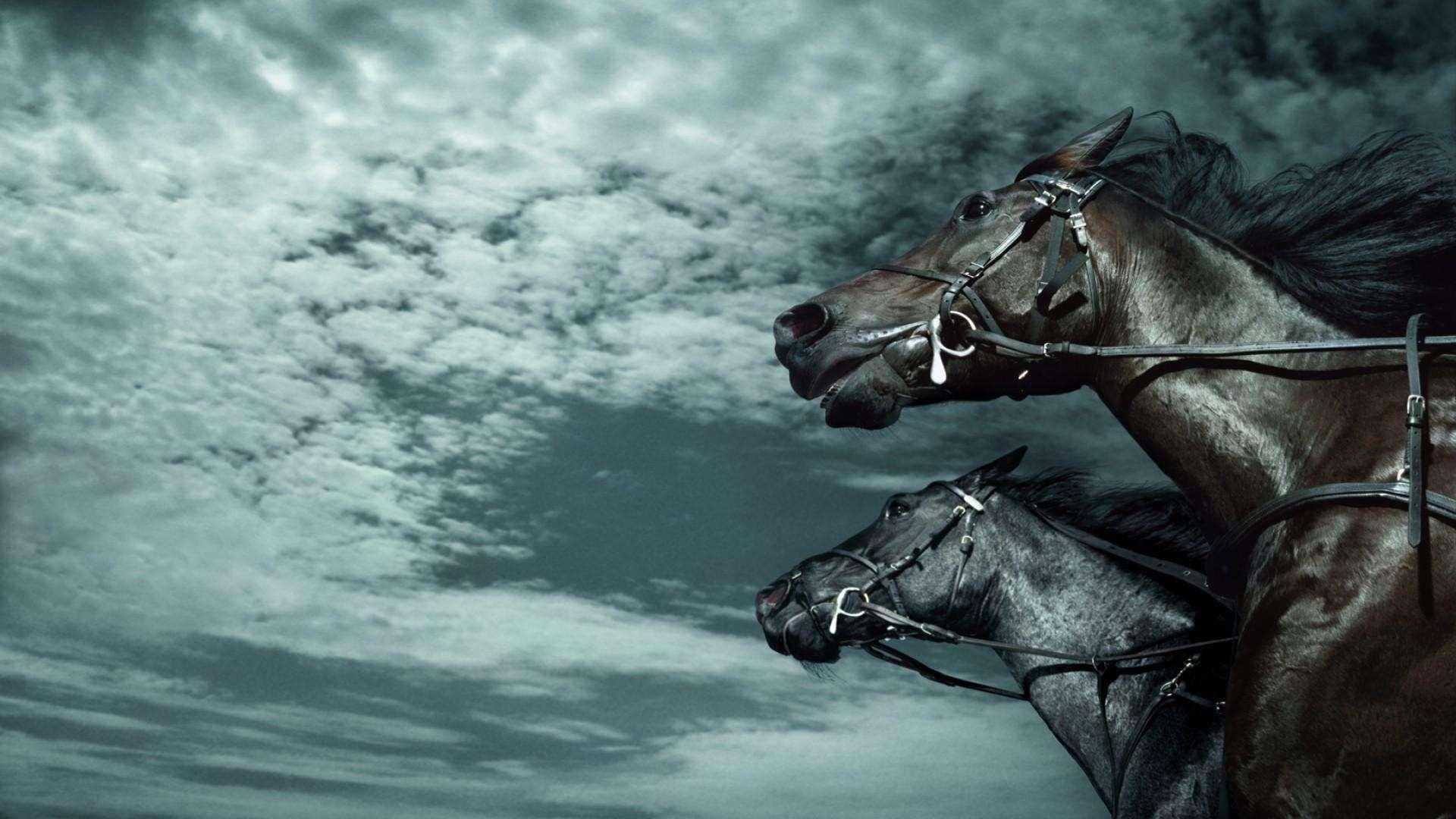 Photos Horses Wallpaper Hd 1080p Horses Horse Wallpaper Beautiful Horses