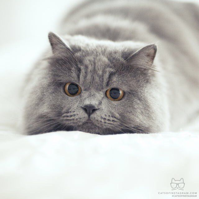 "From @panther.cat: ""Hello toy! "" #catsofinstagram by cats_of_instagram"