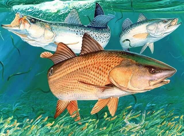 Chums By Guy Harvey Fish Art Sea Life Art Underwater Fish