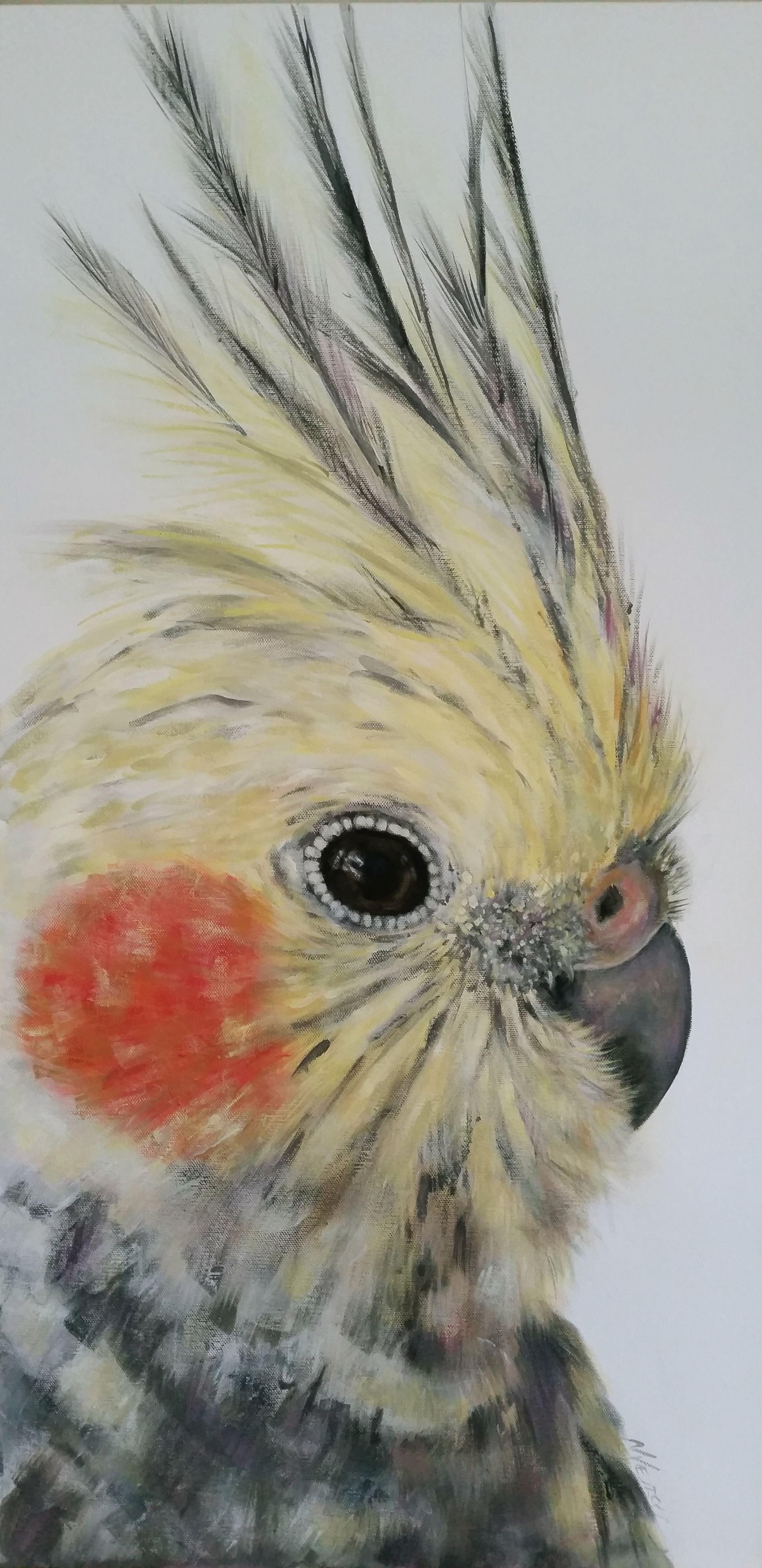 COCKATIEL PAINTING Bird art, Australian native birds