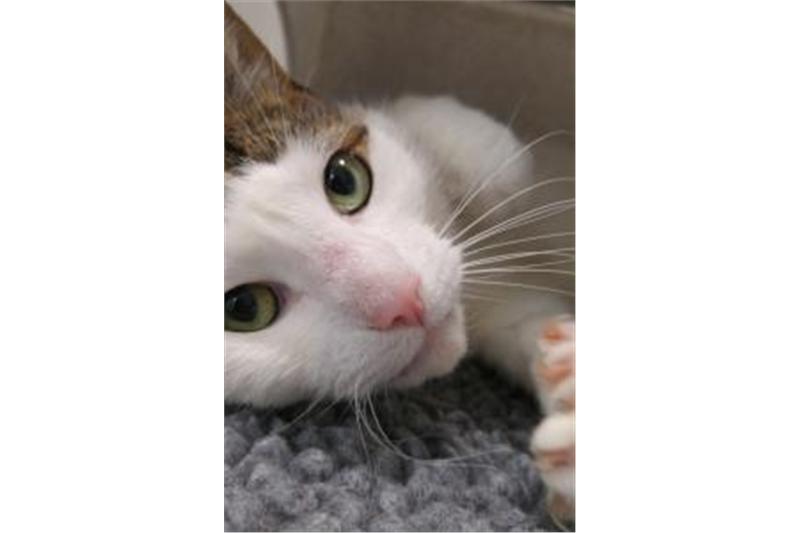 Avid Ready For Adoption Cat Adoption Adoption Cats