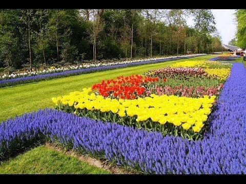 Dutch Gardens   Dutch Gardens Colorado   Dutch Gardens Louisiana
