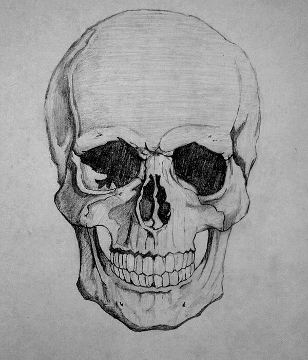 How To Draw A Skull By Howtodrawitall On Deviantart Skull Drawing Skulls Drawing Skull