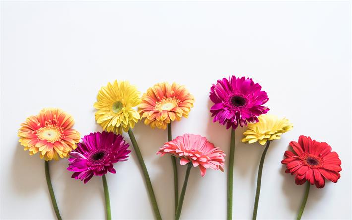 Fondos De Pantalla De Flores: Descargar Fondos De Pantalla La Gerbera, El Colorido De