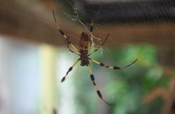 homemade spider spray to the rescue homemade cleaners rh pinterest com