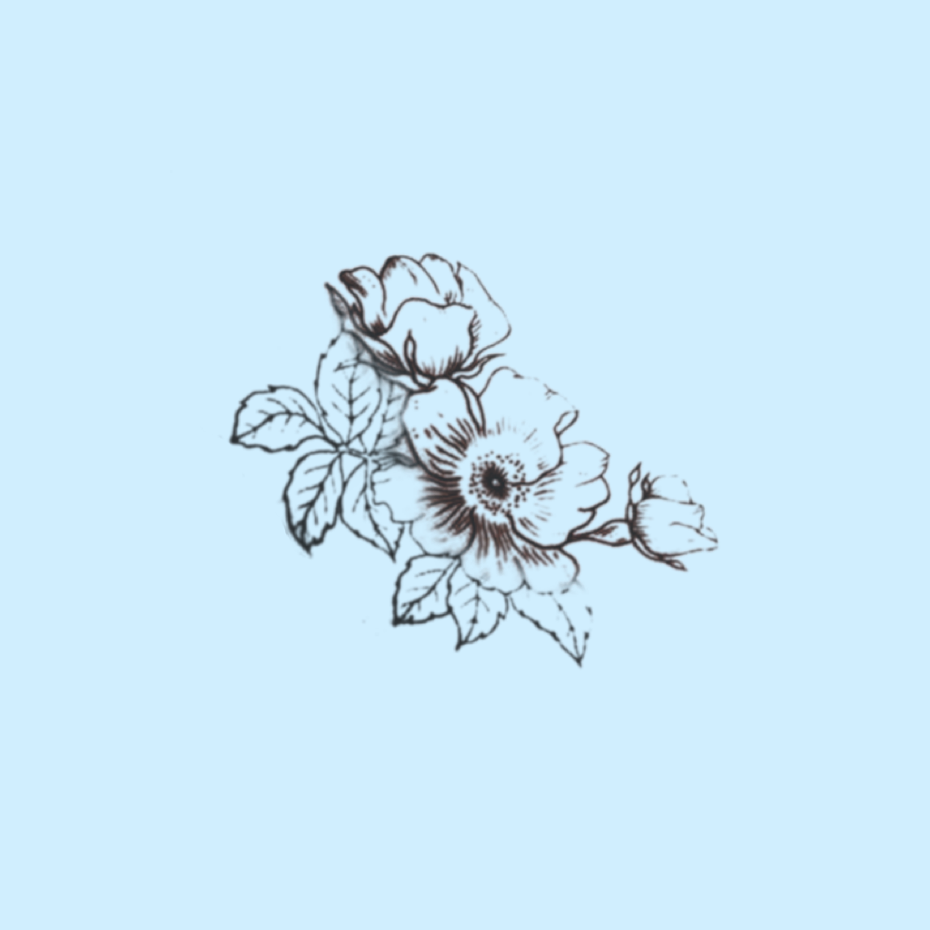 outline of flowers (light blue aesthetic) created and