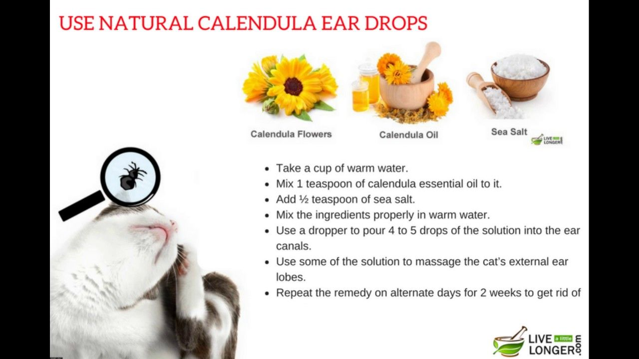 Proven Home Remedies For Ear Mites In Cats Youtube Home