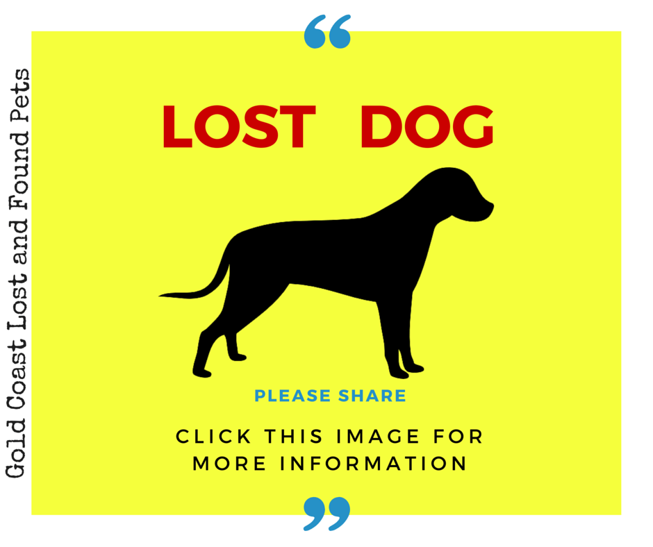 Gold Coast Lost And Found Pets Lost Dog Gold Coast Lost And Found Losing A Dog Pets Find Pets