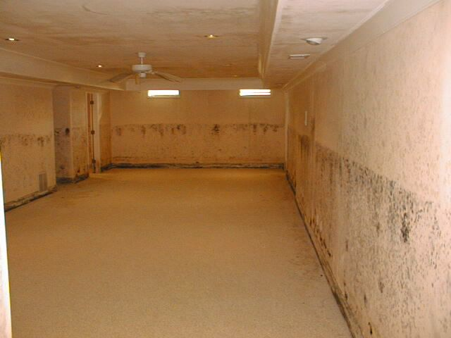 flooded basement with mold growth fungus amongus pinterest rh pinterest at