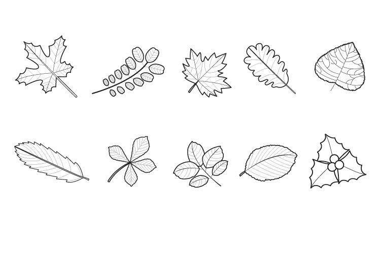 Ausmalbild Herbst Herbstlaub Ausmalen Kostenlos Ausdrucken Herbstlaub Ausmalen Malvorlagen