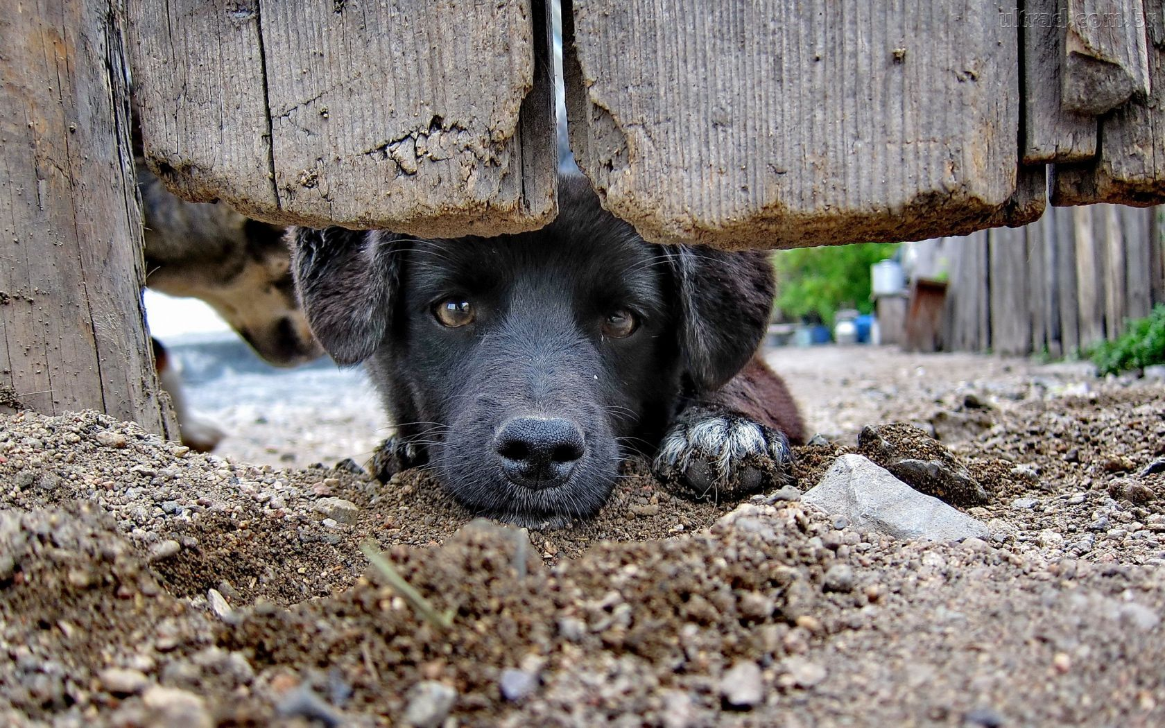 cão curioso.