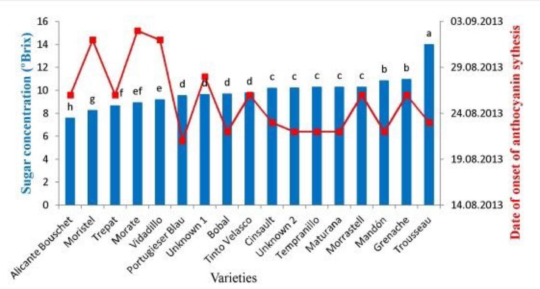 Diferencias de varietales contenido azúcar #uva, comienzo síntesis antocianos, para 18 variedades tintas @RiojaWine_ES vía @icvv_rioja