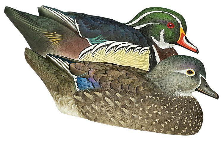 0a8dadd3bbfd266871861d839de292b2 - How To Get Rid Of Ducks On Your Dock