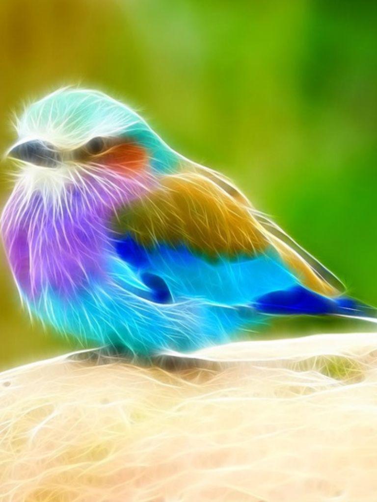 Bird Of Paradise God The Great Creator Pinterest