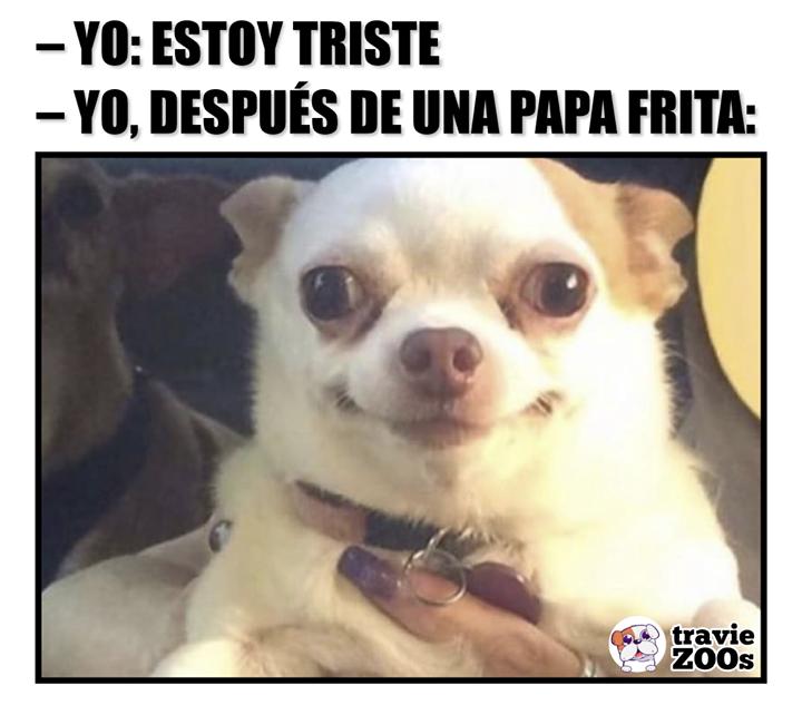 Listo No Solucione Nada Pero Me Siento Mejor Memes Divertidos Sobre Perros Memes De Perros Chihuahua Memes Divertidos