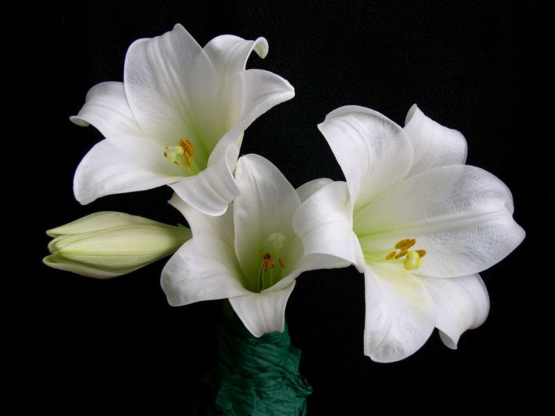 más flores blancas | Flores blancas | Pinterest