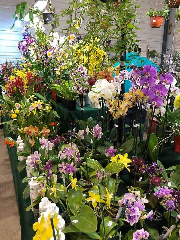 orchidee paris event center