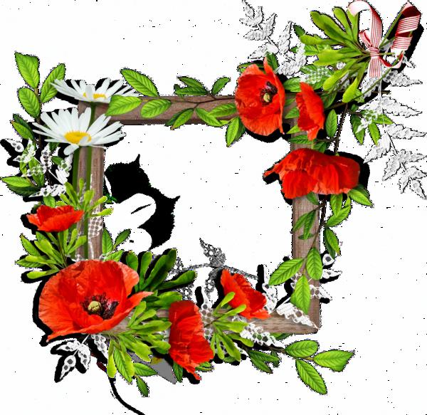 600 583 frames pinterest coquelicots fleur et affiches. Black Bedroom Furniture Sets. Home Design Ideas