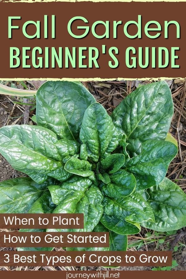 How to Plant a Fall Garden - The Beginner's Garden