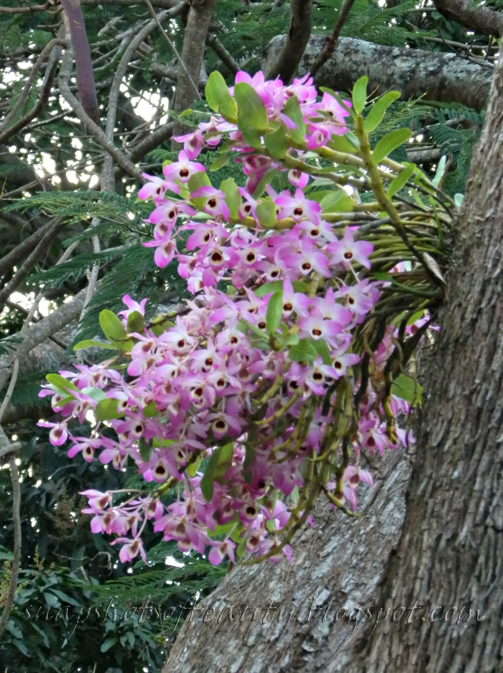 The Orchid Tree Up The Road Orquideas Dendrobium Cultivo De