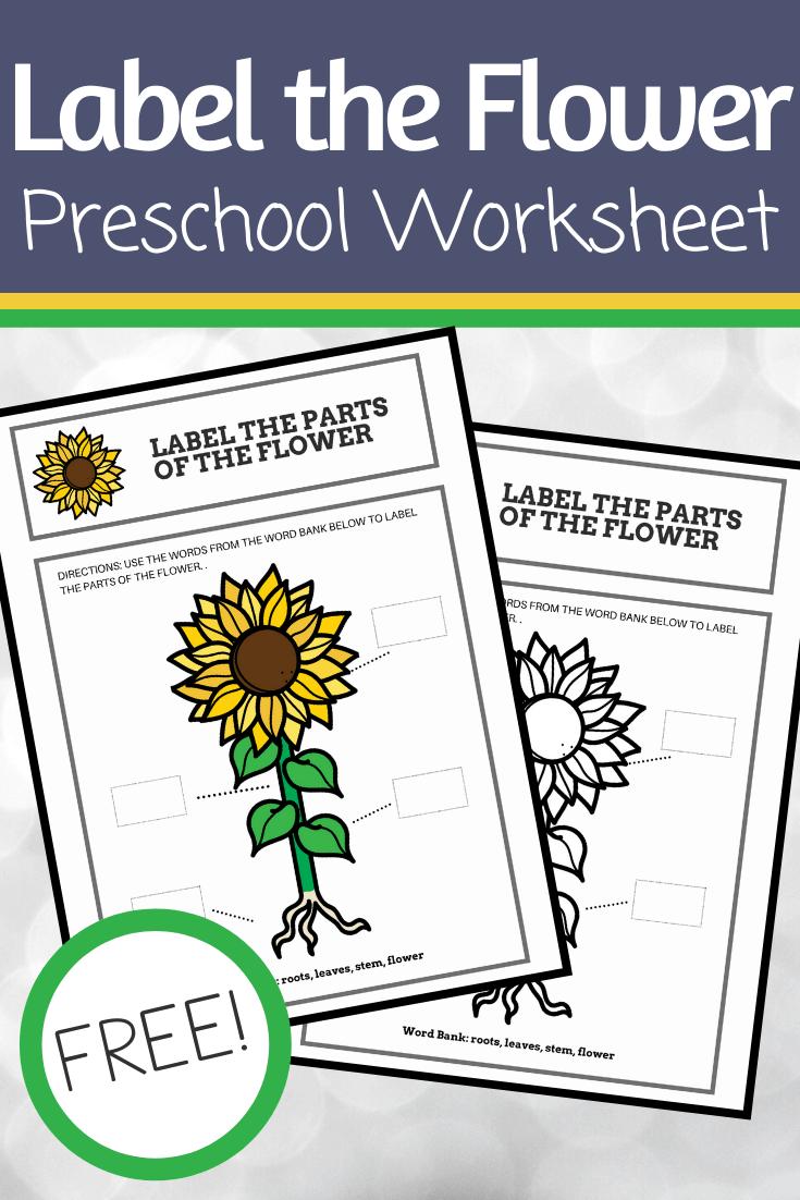 Flower Preschool Activities For Spring And Summer Parts Of A Flower Flower Activities For Kids Preschool Worksheets [ 1102 x 735 Pixel ]