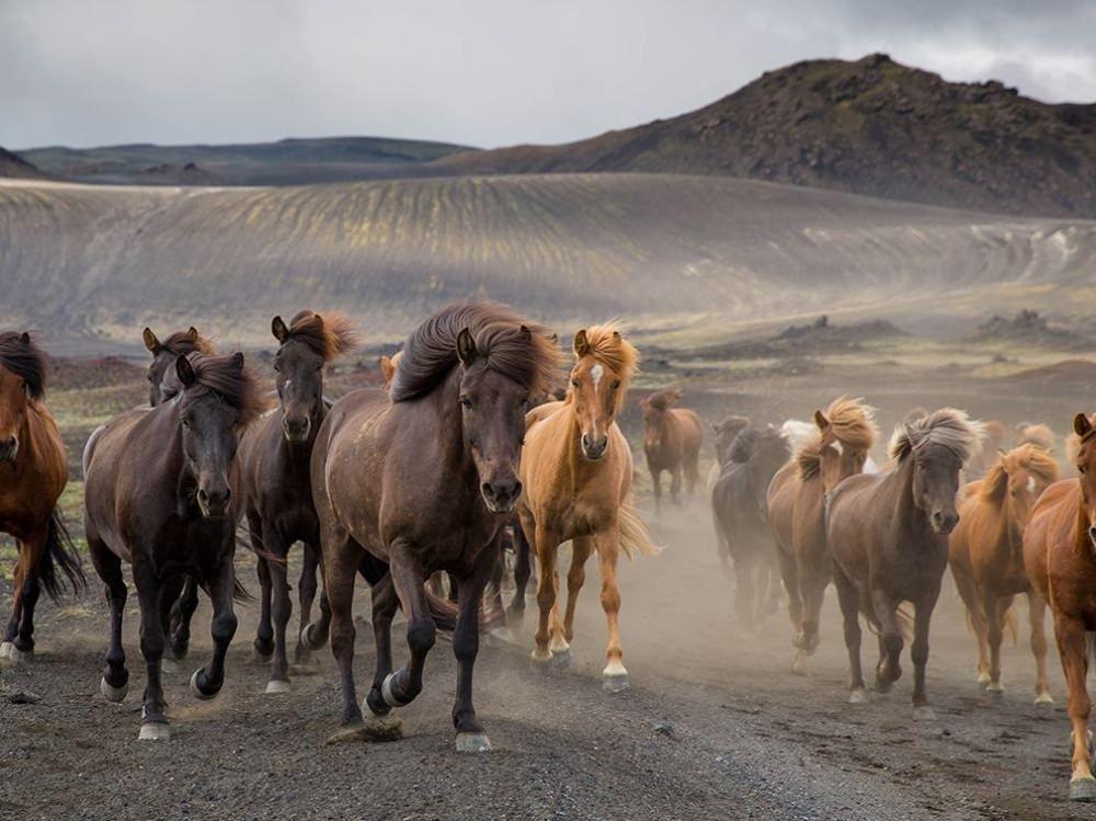Yılkı Atları - İzlanda Yaylaları