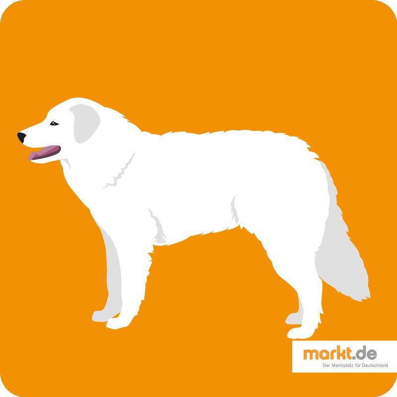 Kuvasz Charakter, Herkunft, Aussehen Hunderassen