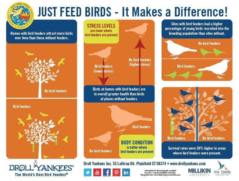 Wild Birds Unlimited Just Feed The Birds It Makes A Di 2020 Tempat Makan Burung Bijak Lucu