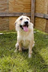 Rayeda is an adoptable Terrier Dog in Marrero, LA. Rayeda is a sweet 1 year old terrier mix that was brought into the shelter with her companion dog and best friend, Itto; their owner had died and his...