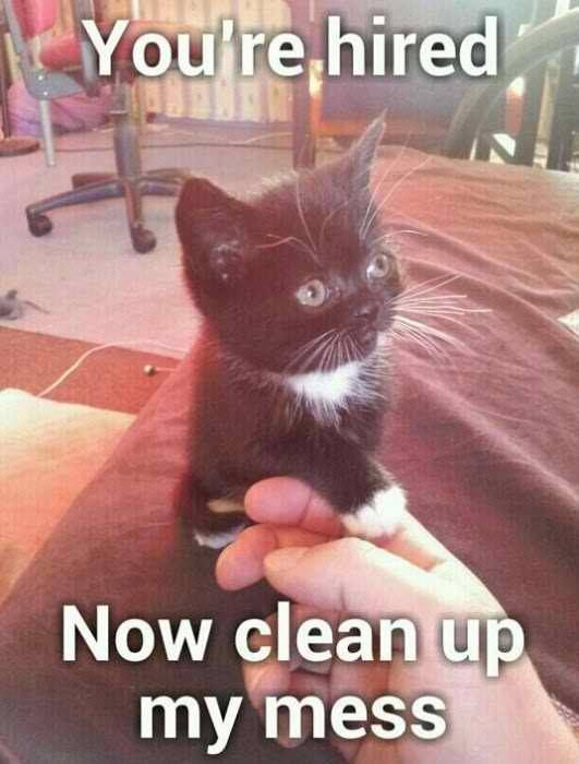 "Yup! This funny cat is saying, ""You are hired now clean up ... Funny Videos Clean"