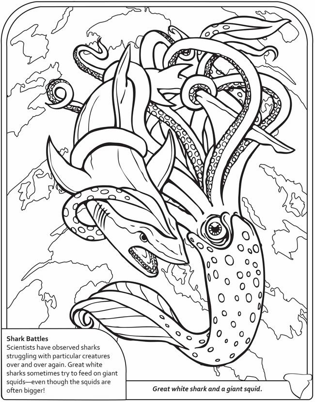 squid coloring pages for kids # 27
