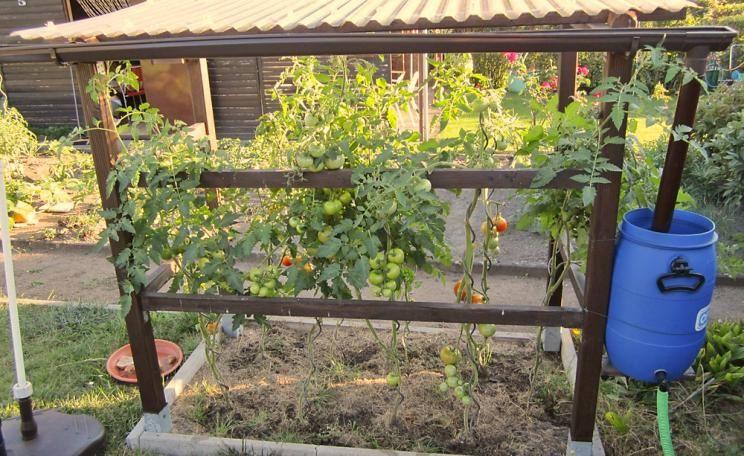 Tomatenhaus Selber Bauen Gartendeko Pinterest
