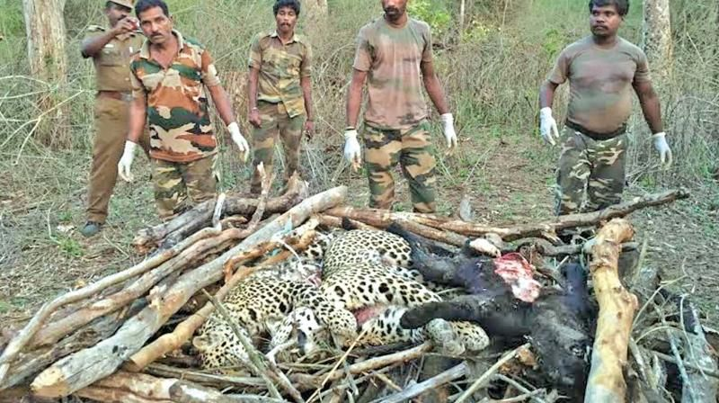 Drought ravages forest animals in Tamil Nadu