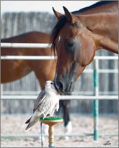 When a bird accepts your affection, you are special.  The connection between this horse and bird are so tender and filled with understanding.