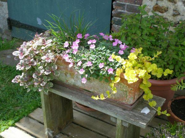 choisir une plante pour jardini re quelques id es et astuces plut t jardin d. Black Bedroom Furniture Sets. Home Design Ideas