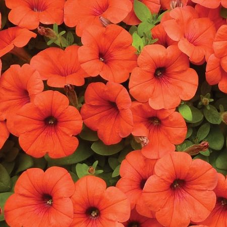 Pin On Garden Annuals Containers