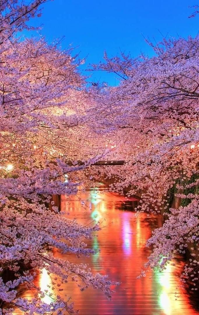 Beautiful cherry blossom wallpaper iphone - Beautiful nature wallpapers for iphone ...