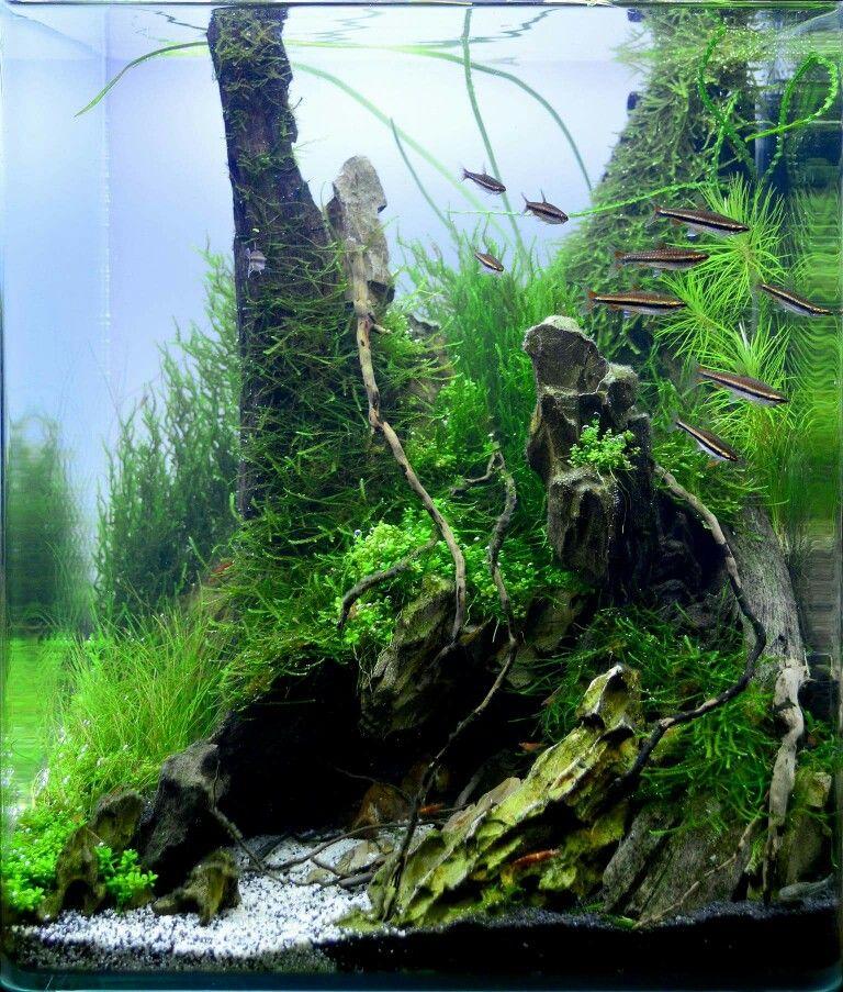 acuario aduascape aquarium freshwater aquarium freshwater rh pinterest com