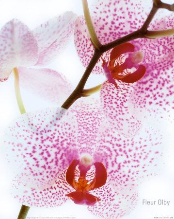 Orchids Most Beautiful Flower You Could Recieve Delicate Exotic