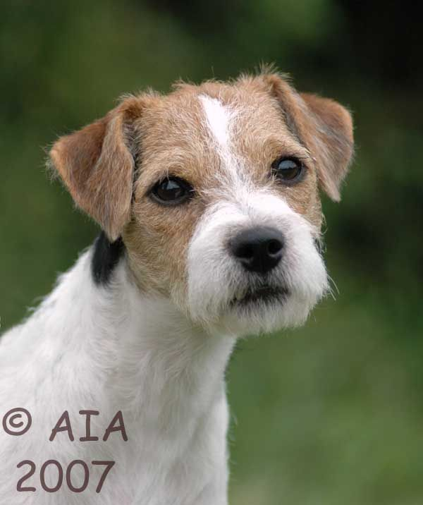 Pin By Katie Terry On Dogs Jack Russell Dogs Jack Russell Dog Friends