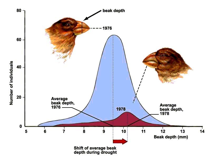 Microevolution Due To Natural Selection Observed Directly In